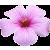 Flower icon.41 by RedqueenAllison
