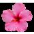 Flower icon.43