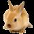 Rabbit icon.28