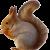 Squirrel icon.12