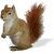 Squirrel icon.14