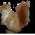 Squirrel icon.14