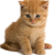 Kitten icon.2