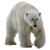 Polar Bear icon.4