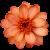 Flower icon.45