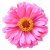 Flower icon.47