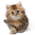 Kitten icon.6