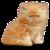 Kitten icon.7