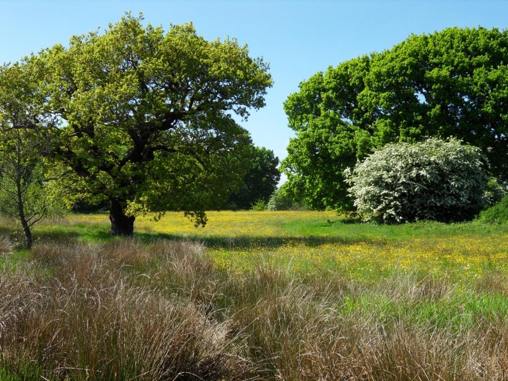 Brockholes Walk by Softspoken-One