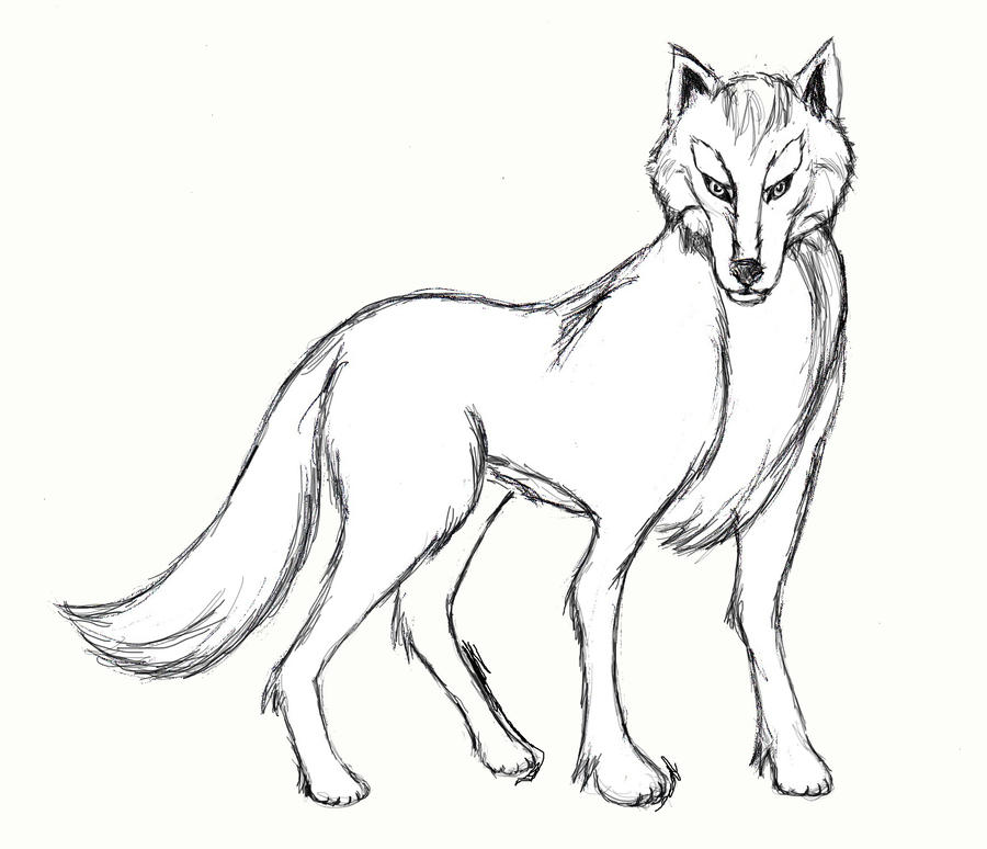 How to draw a wolf body - photo#18