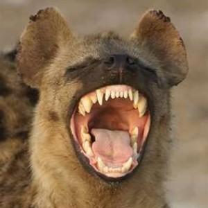 hisui-hyena's Profile Picture