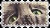 Kitten Stamp by allivegotarerainbows