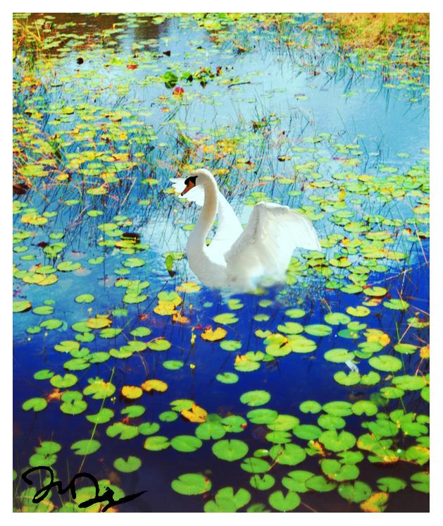 Way of the Swan, Detail by nine9nine9