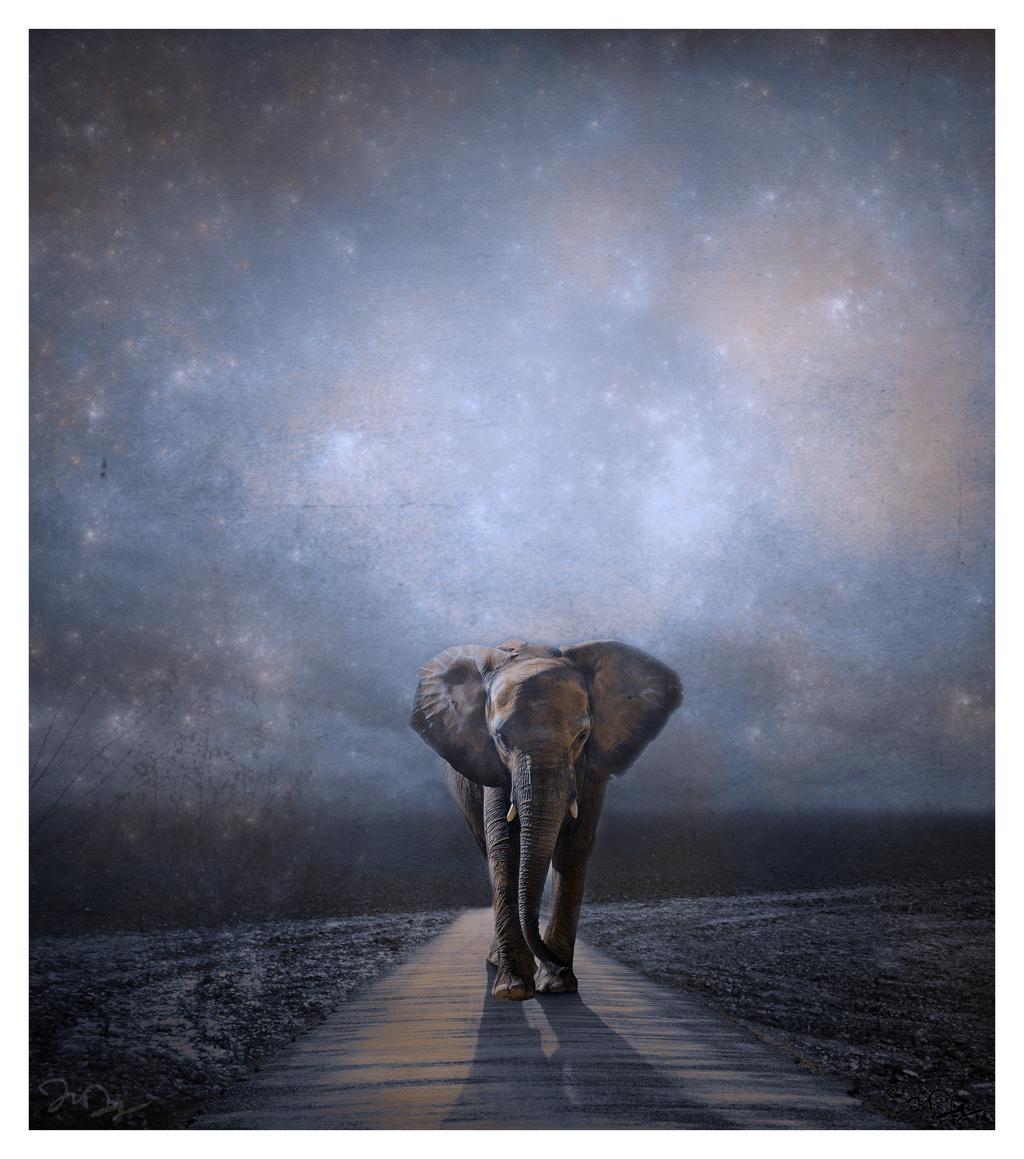 I walk alone... by nine9nine9