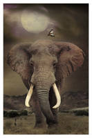 The Elephant, The Only Harmless Great Thing by nine9nine9