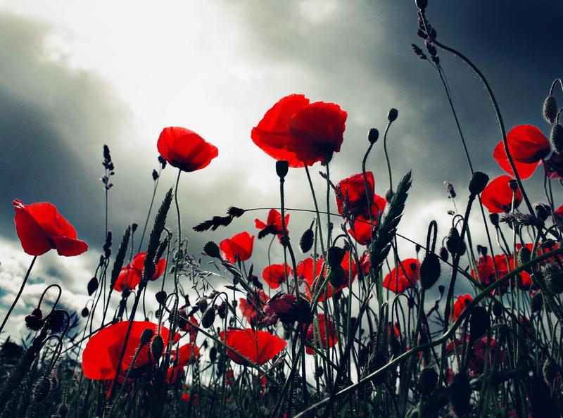 Poppy Storm by iilva
