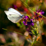 Butterfly I by iilva