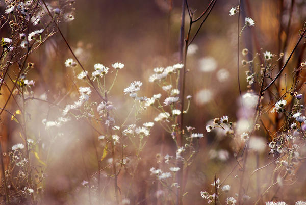Blossoms among weeds by iilva