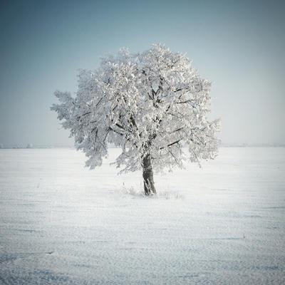 A Tree of Memory