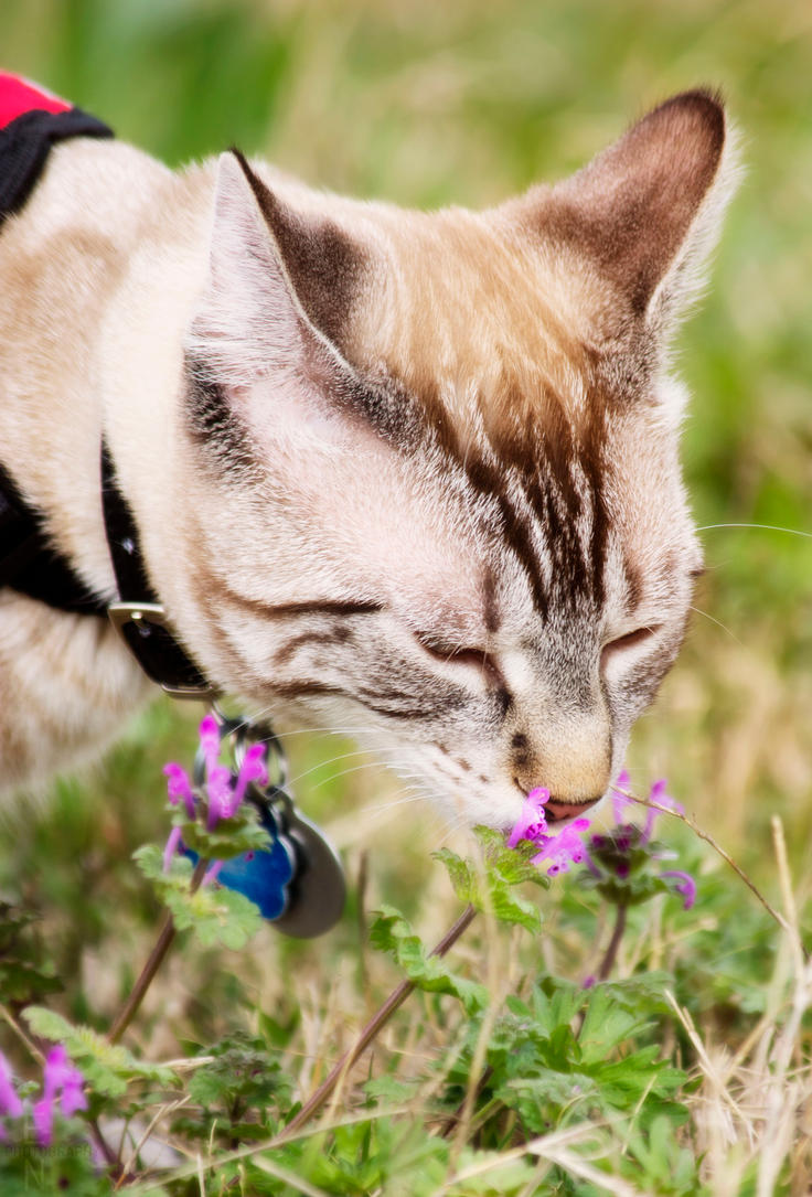 Gotta stop and sniff some flowers by ShineeDragon