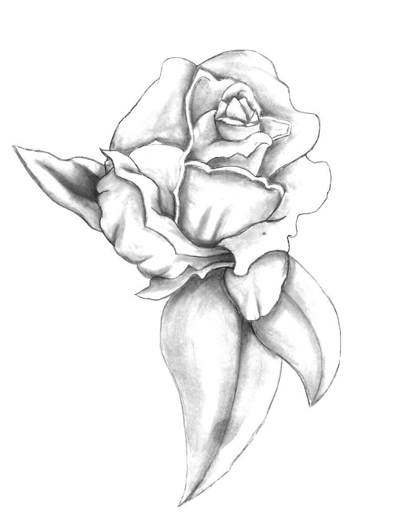 Rose by Genesis19