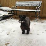 Lulu snow beard by muteor