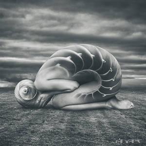 She shell