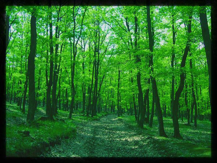 Green by Aghiutza