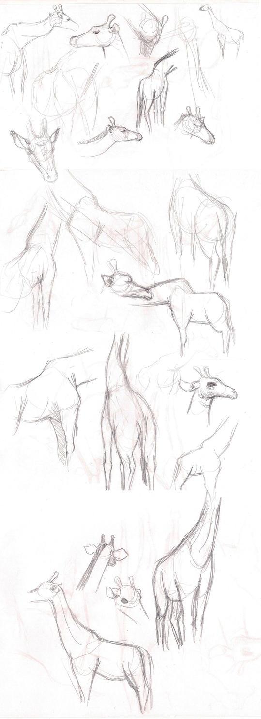 Girafe studies by GuaxGuax
