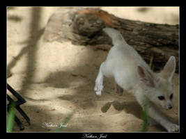 Frollock Fox by zwabbe15