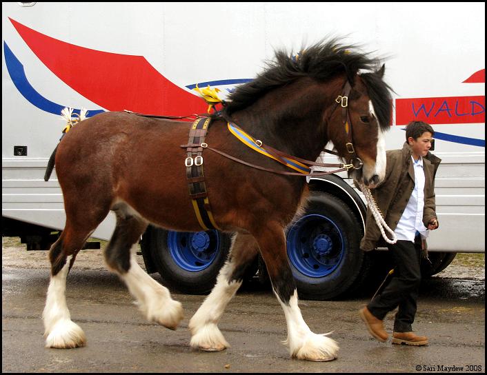 Shire Horse Show: Stallion 11 by ladyepona
