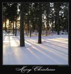 Christmas card of 2007