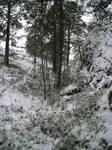 Forest in December