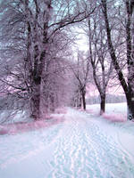 Snowy Road by patrolski