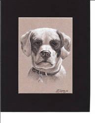 Dog Portrait by Albert-G-Lopez