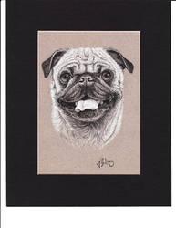 Pug Portrait by Albert-G-Lopez