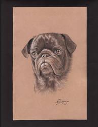 Pug by Albert-G-Lopez