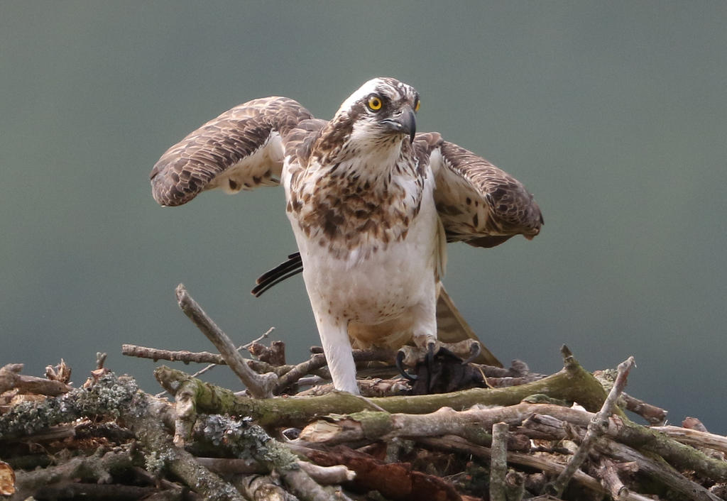 Back at the nest by NurturingNaturesGift