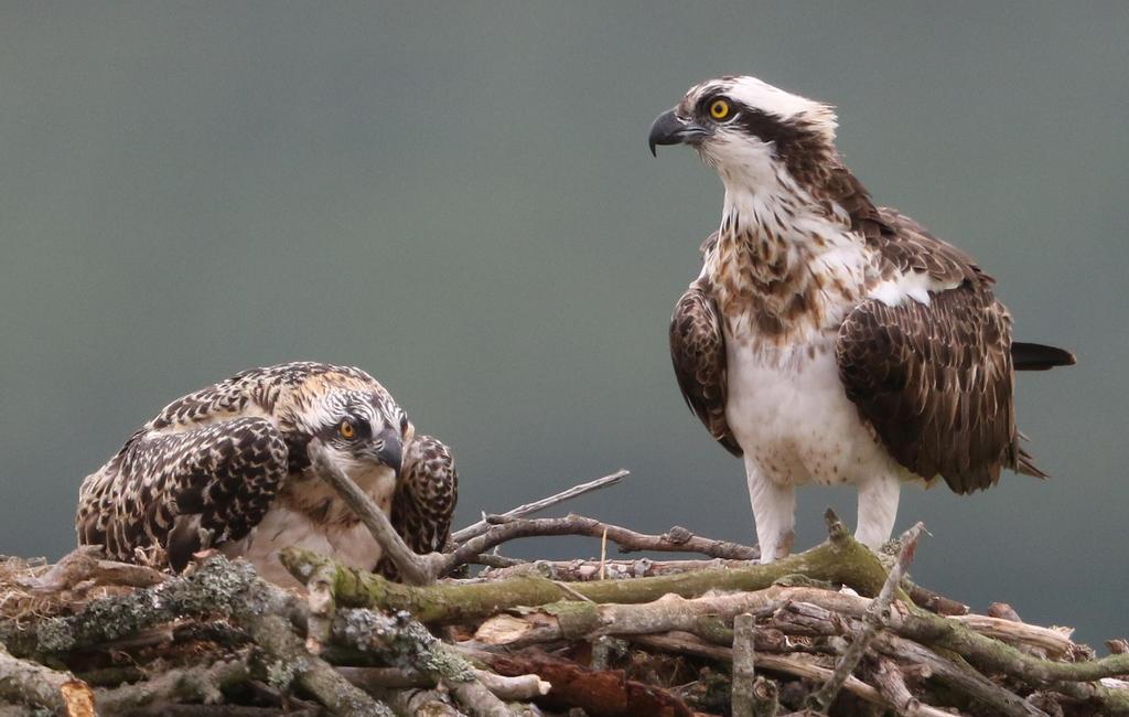 Mum with chick by NurturingNaturesGift