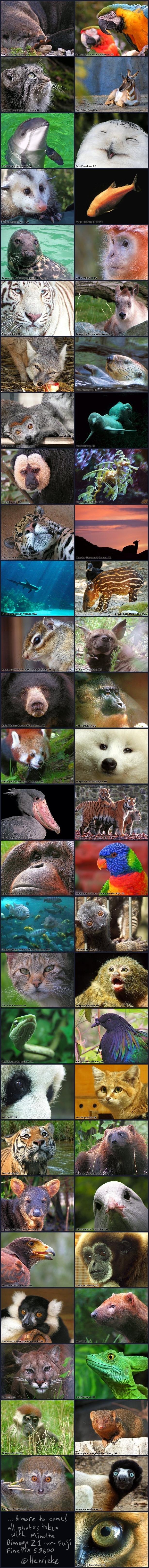 Greetings from 55 zoos by Henrieke