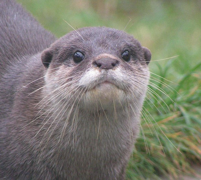 I Said It On Porpoise...: What I learned from my animal ...