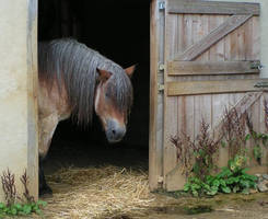 Horse by Henrieke