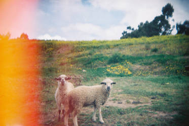 Lomography Rules - 2 by slumbrous