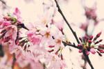 Spring Again 2