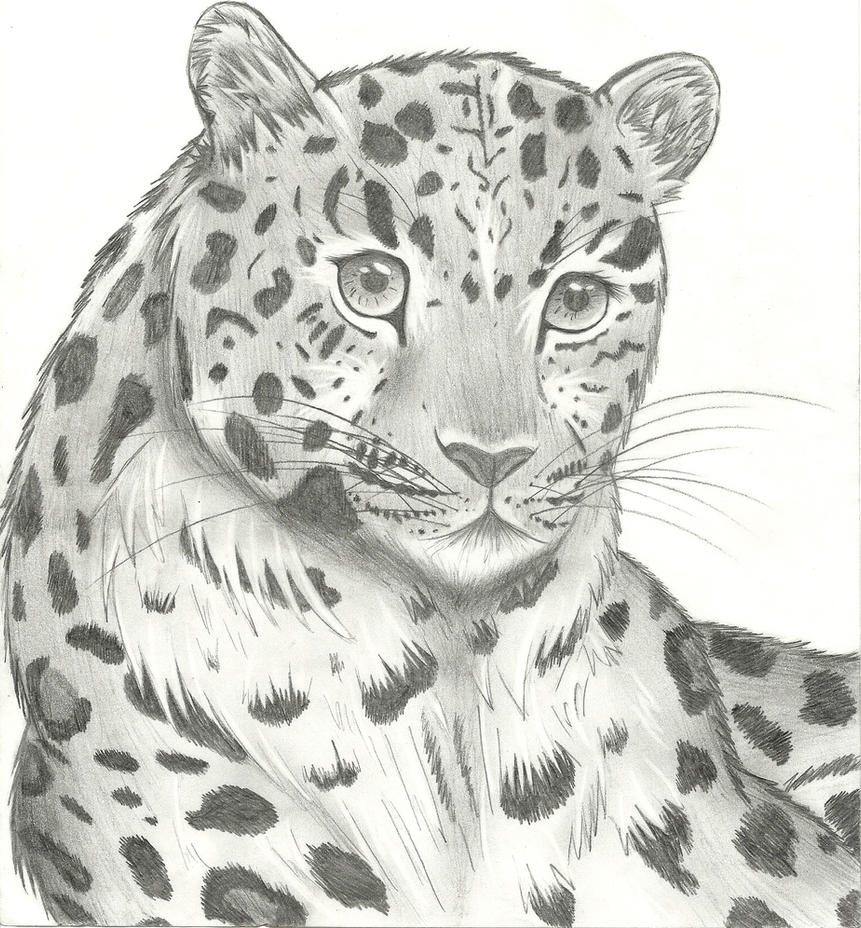 Leopard sketch by rozara on deviantart for Easy detailed drawings