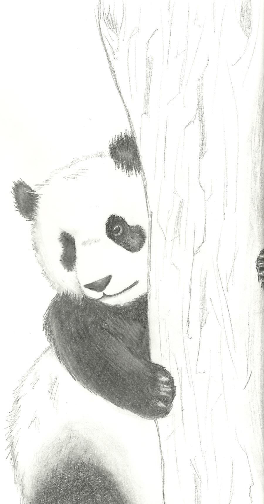 Panda Sketch by Rozara