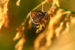 Butterfly Hues