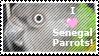 Senegal Parrot Stamp by EbilWolf