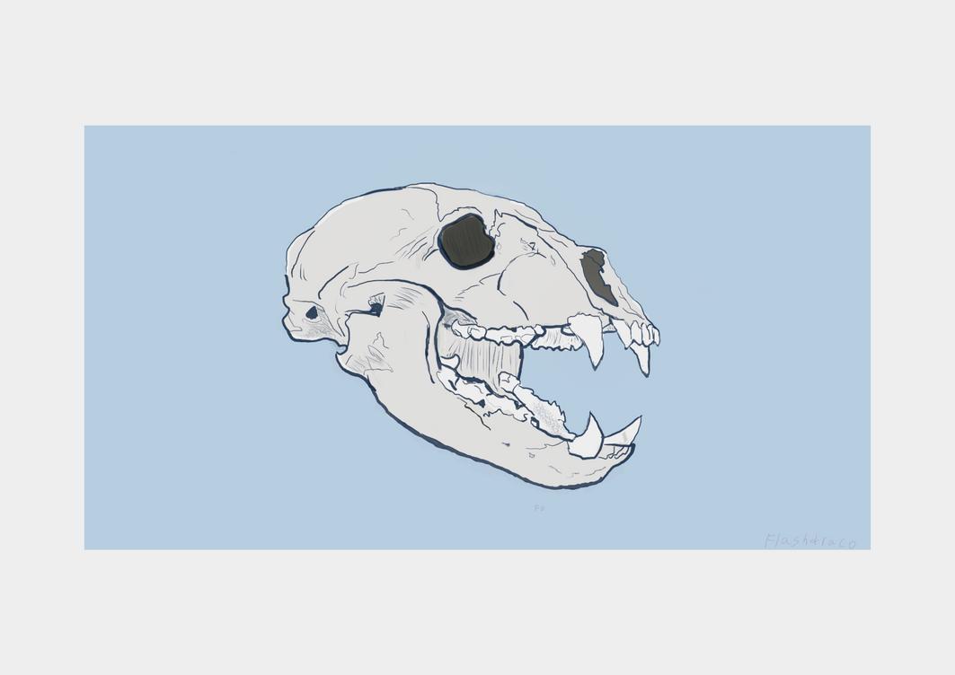 Bear skull by flashdraco