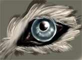 wolfeye by Nothernwolf